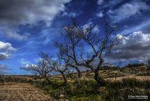 Pepe Haro Photography - Mis almendros / fotografía