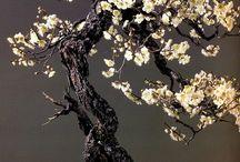 Bonsai so pretty!!! / by Robin Molberg