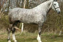 _Horse