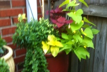My Plants 2012 / All things growing at my place 2012 / by Richard Carter