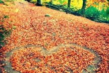 Season ♥ Autumn