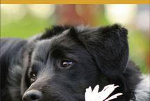 Pets / Heartwarming pet pictures