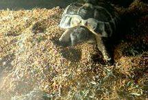 My turtle♡