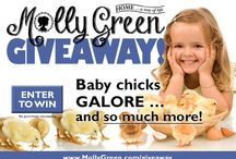 Molly Green Giveaways / by Molly Green Magazine