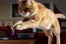 Katten / i love cats