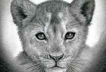 how to sketch a lion cub