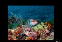 Diving in Golfo Aranci - Concorso In&Out / Diving in Golfo Aranci - Sardegna Hotel Gabbiano Azzurro