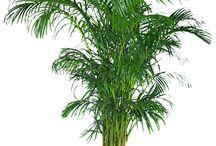 10 Plantas que purifican el aire