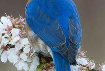 Birdhouse, Birds! of North America / Bird of North America that use birdhouses