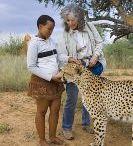 Reportage Hemis : Cheetah Conservation Fund - Le Guépard : une course pour la survie