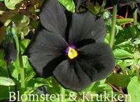 Klematiser, stauder og andre smukke planter / Fine klematis', gode stauder og andre smukke planter som jeg ønsker mig til haven.