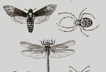 Bug tat