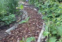 Tuin met boomwortels