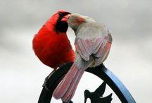 embrace | blízkost