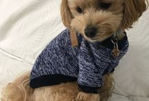 Dog Clothing and Accessories