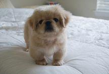 puppy love / by Jessica Alston