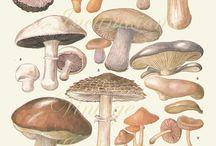 design - mushrooms illustrations