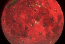Radiant Reds / by Renee' Freidin