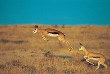 Namibie / Un endroit magnifique et des animaux en nombre.