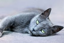Cats and animals... / I am mainly a gray cat person and I love all cute cat /animal pictures.  / by Sarah MB
