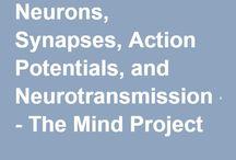 Neurons, synaptic transmission, neurotransmission