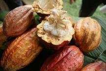 Kakaoreisen - Dominikanische Republik