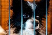 DogTV Against Animal Cruelty