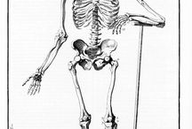 Oeuvres (Anatomie, Traité, Mort)