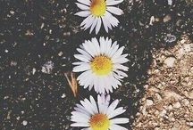 aesthetic//spring//flowers