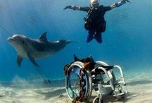 Handicapped Scuba Diving! / This board has awesome ideas about ways to use scuba diving as a form of recreational therapy!