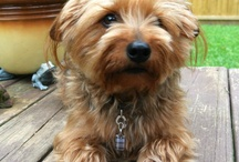 Pet Products I Love... / Dog products tested and approved by Kirby the Dorkie and a few we lust.