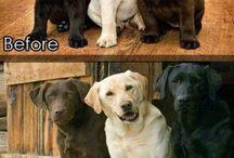 Animais que adoro / animals