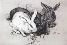 rabbits inspire