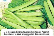 Mongeta tendra / Judía verde  / Aquí trobaràs curiositats sobre la mongeta tendra / Aquí encontrarás curiosidades sobre la judía verde