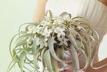Букет невесты-тилландсия