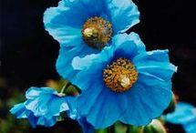 Gardening / Herb, veggie and flower garden ideas