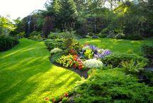 Garden Beds & Borders