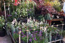 Garden Beds / Ideas for my iron bed garden