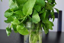 Herb & Veggie Garden
