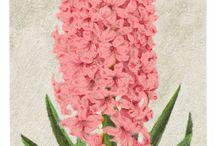 Vintage Flower Prints on Canvas