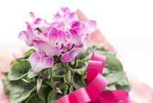Hanamasa Pot flower & Plant / ハナマサの花鉢と苗ものです。