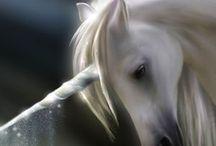Unicorni e cavalli