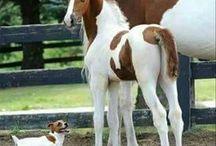 동물 및 반려동물