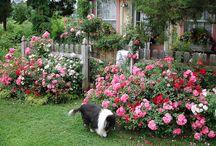 cottag garden