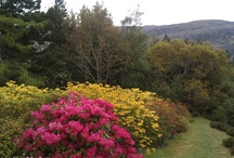 Ullapool Gardens Open Day