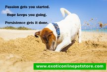 Dog Quotes / Look at these cuties and read some inspirational thoughts to brighten up your day. ^_^
