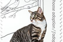 Kedi motifli pul