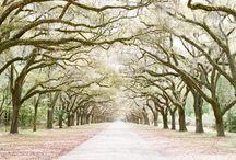 Savannah  / My next trip / by Nanette Spiegel
