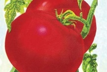 Heirloom Garden Seeds / Organically produced Heirloom Vegetable Seeds for your home garden or homestead.
