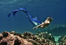 sirene / by Constance Snow